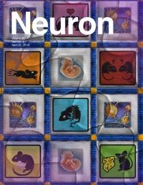 NEURON_86_2.c1.indd